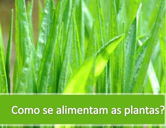 como as plantas se alimentam