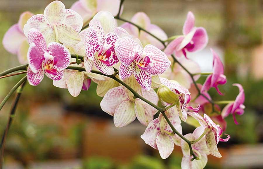 plantar orquideas