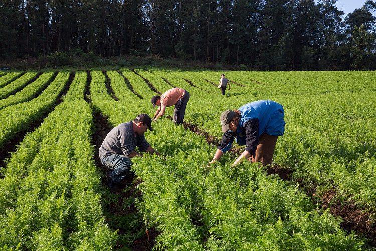 Resultado de imagem para agricultura brasileira
