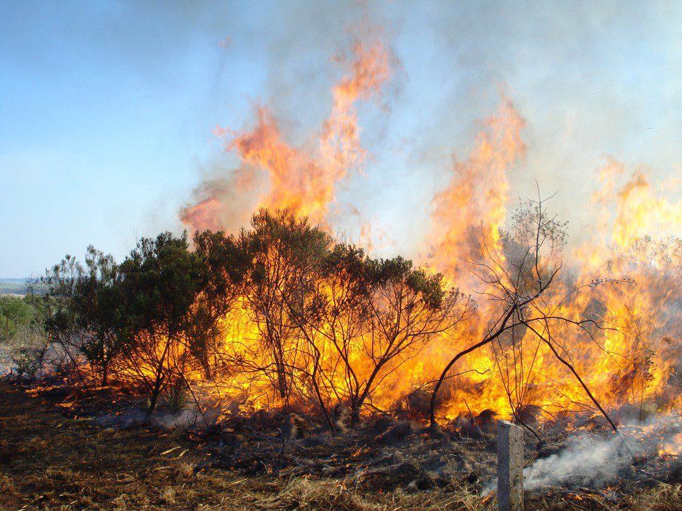 queimada para agricultura