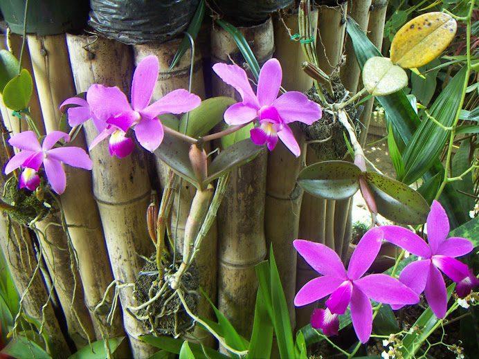 aprendendo a cultivar orquideas