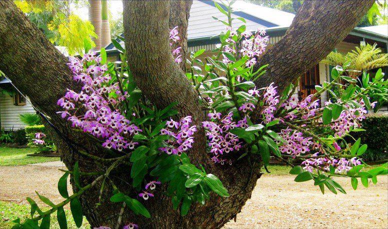 Como cultivar orquídeas: Guia completo