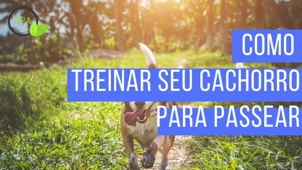 treinar cachorro passear