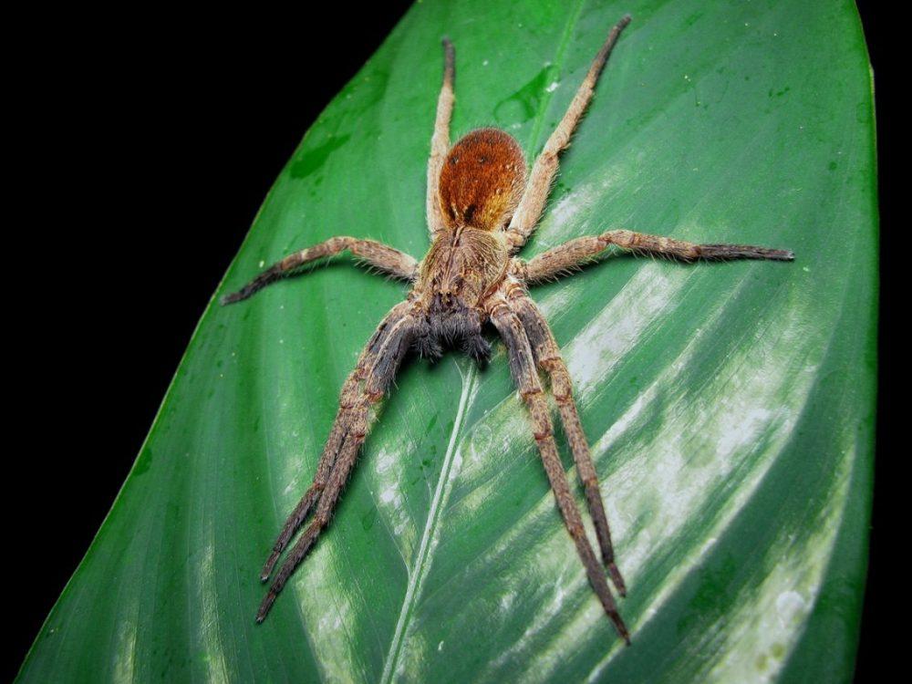 aranha na planta