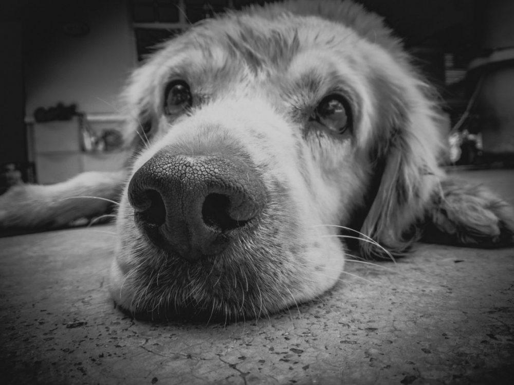 cachorro triste