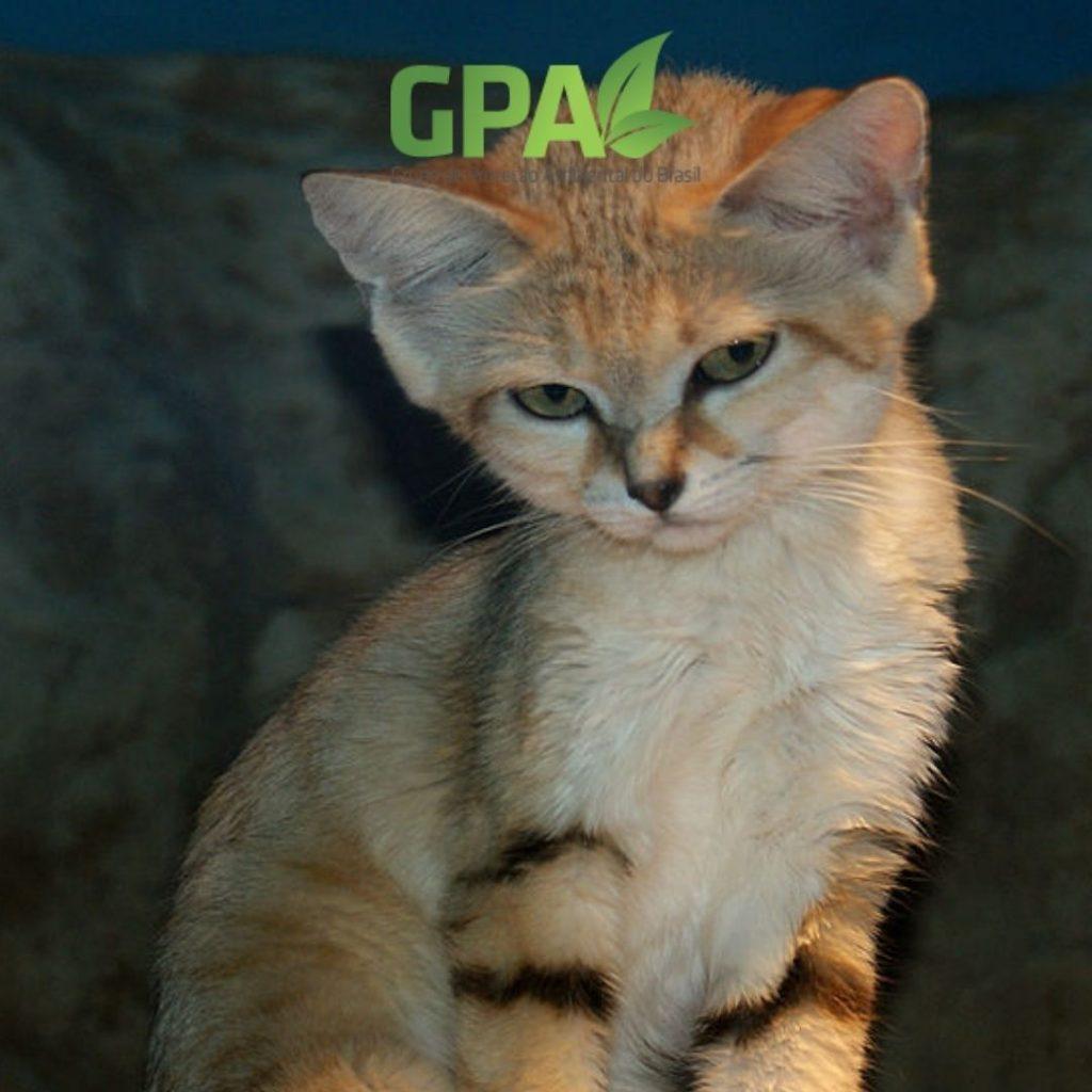 foto do gato do deserto com simbolo do GPA Brasil