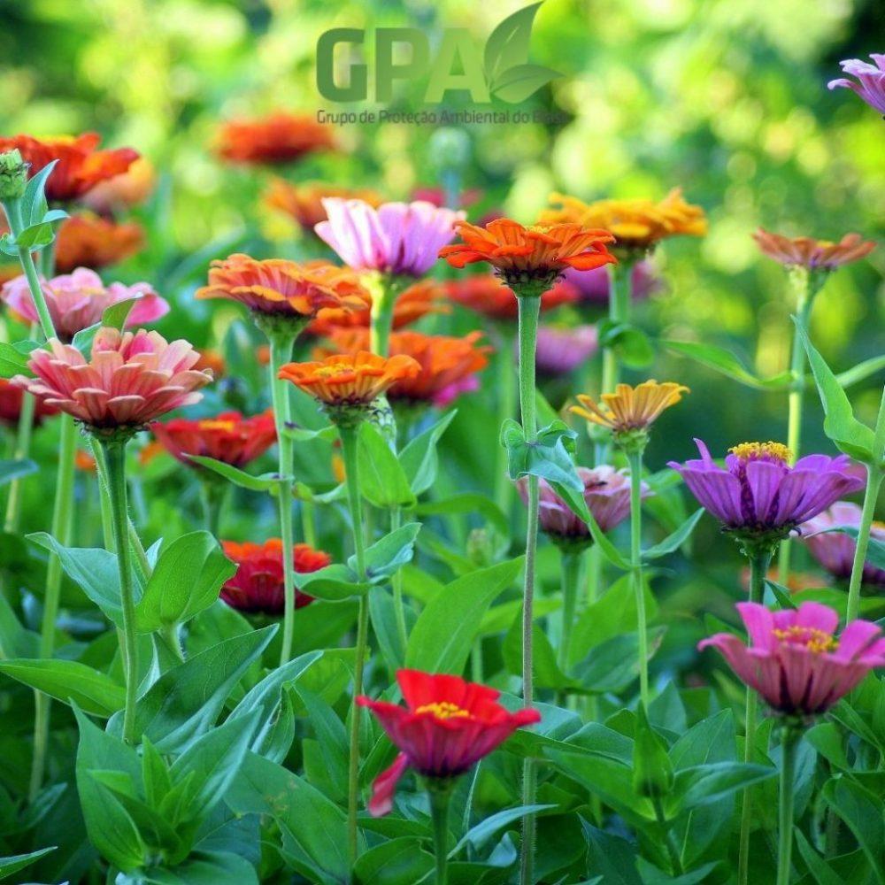 jardim com flores coloridas