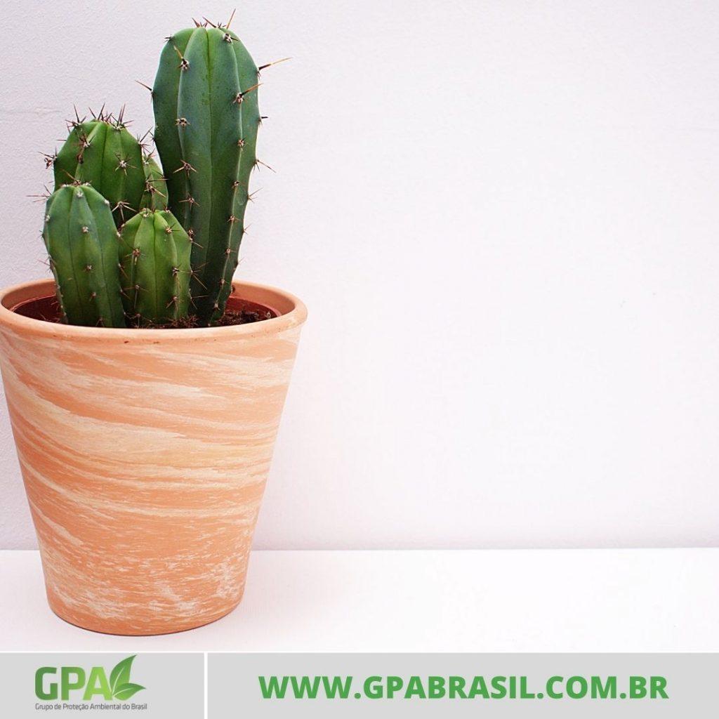 foto d e  um mini cacto plantado em um vaso