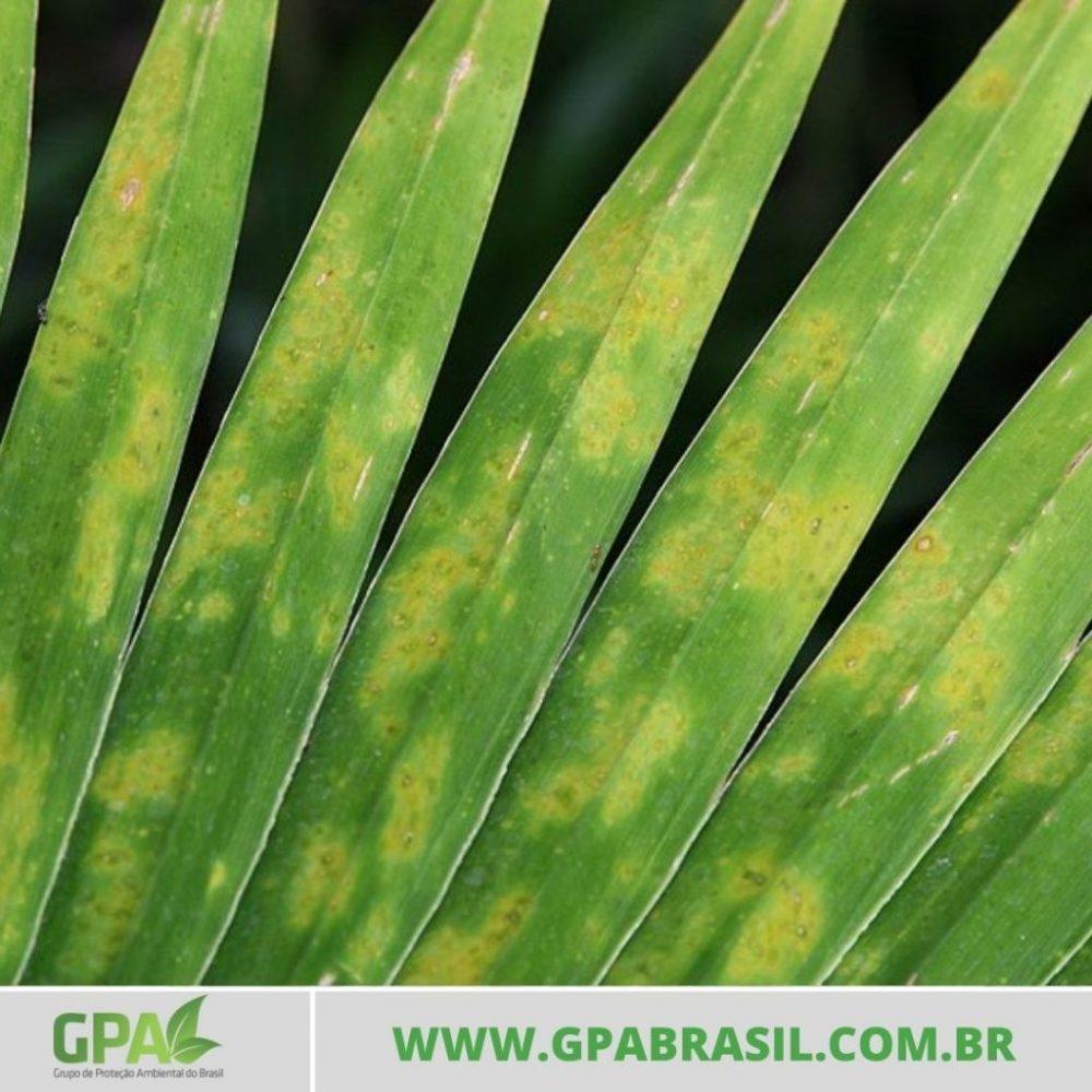 folhas da palmeira leque em zoom