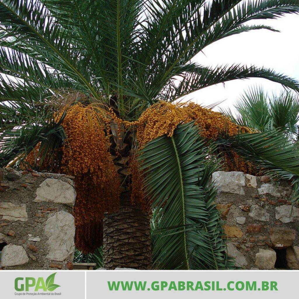 foto de uma palmeira entre muros