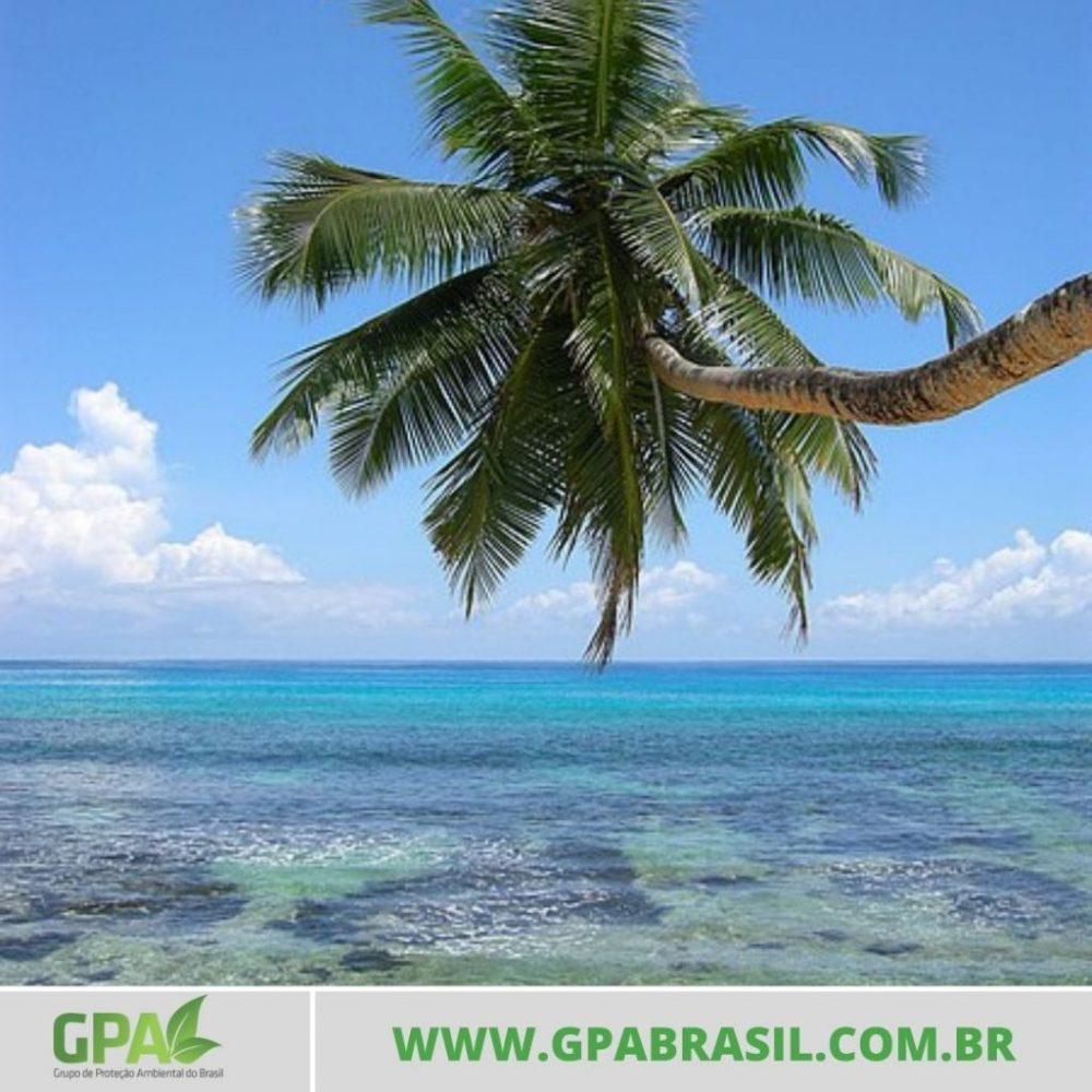 foto de uma palmeira na praia